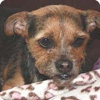 Adopt A Pet :: TORI - Mission Viejo, CA