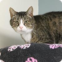 Adopt A Pet :: Nolan - Medina, OH