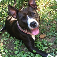 Adopt A Pet :: Angel - Greenville, SC