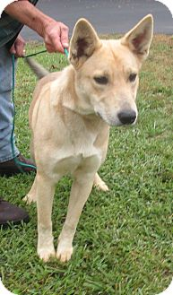 Setter (Unknown Type) Mix Dog for adoption in Reeds Spring, Missouri - Mookie