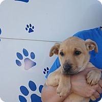 Adopt A Pet :: Mags - Oviedo, FL