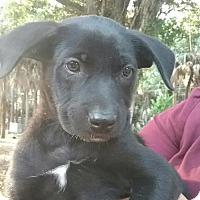 Adopt A Pet :: Vicory - Naples, FL