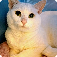 Adopt A Pet :: Lilly - Madisonville, LA