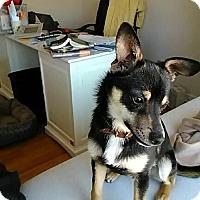 Adopt A Pet :: Pixel
