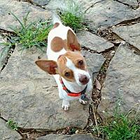 Adopt A Pet :: Abbot - Muldrow, OK