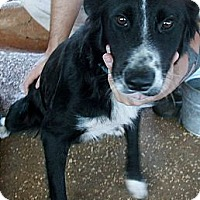 Adopt A Pet :: Suzie-Q - dawson, GA