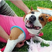 Adopt A Pet :: Diva - Los Altos, CA