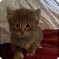 Adopt A Pet :: Fluffy One - New Egypt, NJ