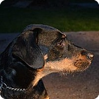 Adopt A Pet :: Flynn - New Boston, NH