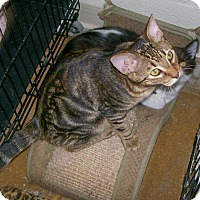 Adopt A Pet :: Dale - Scottsdale, AZ