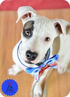 Terrier (Unknown Type, Medium) Mix Dog for adoption in Bradenton, Florida - Linda
