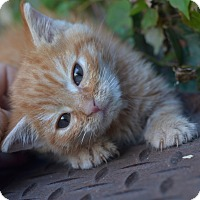 Adopt A Pet :: Binky - Brooklyn, NY