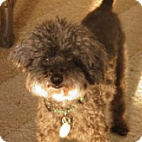 Adopt A Pet :: DANNY BOY - Melbourne, FL