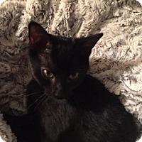 Adopt A Pet :: Tank - Alexandria, VA
