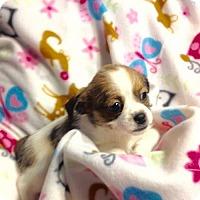 Adopt A Pet :: !4 Blossom - Colton, CA