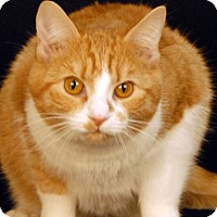 Adopt A Pet :: Ginger - Newland, NC