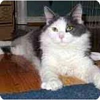 Adopt A Pet :: Becker - Arlington, VA