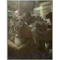 Adopt A Pet :: Dawn - Owasso, OK