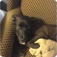Adopt A Pet :: Henry - Beaumont, TX