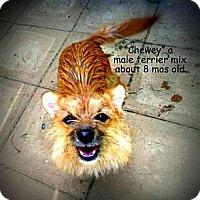 Adopt A Pet :: Chewey - Gadsden, AL