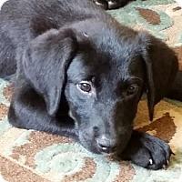 Adopt A Pet :: Dumbo - Cumming, GA