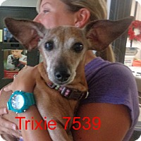 Adopt A Pet :: Trixie - Greencastle, NC