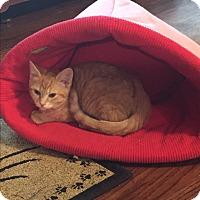Adopt A Pet :: Buttercup - Kelso/Longview, WA