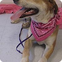 Adopt A Pet :: Bessie - Oakland, AR