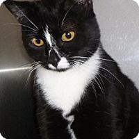 Adopt A Pet :: Tavia - Buhl, ID