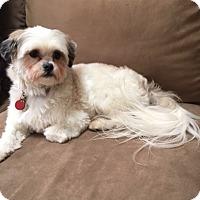 Adopt A Pet :: Lovi - Mt. Prospect, IL