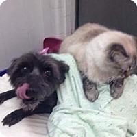 Adopt A Pet :: Molly in Texarkana, TX - Texarkana, TX