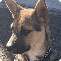Adopt A Pet :: Yoda - BONITA, CA