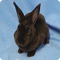 Adopt A Pet :: Alice - Woburn, MA