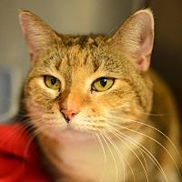 Adopt A Pet :: Boston - Beacon, NY