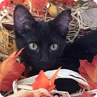 Adopt A Pet :: Charlotte - St Paul, MN