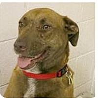 Adopt A Pet :: Nefa super URGENT - Sacramento, CA
