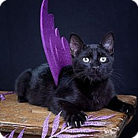 Adopt A Pet :: Raisen - Naples, FL