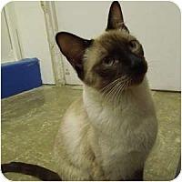 Adopt A Pet :: Portia - Phoenix, AZ