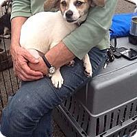 Adopt A Pet :: Marshmallow - Sardis, TN