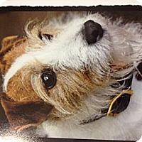 Adopt A Pet :: Gibs in Houston - Houston, TX