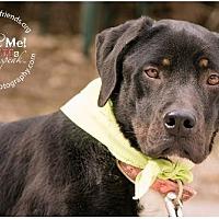 Adopt A Pet :: Jeremiah - Lago Vista, TX