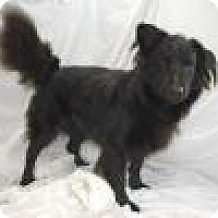 Labrador Retriever/Collie Mix Dog for adoption in Jackson, Mississippi - Watson