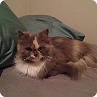 Adopt A Pet :: Peaches - Pittstown, NJ