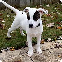 Adopt A Pet :: *Wyatt - PENDING - Westport, CT