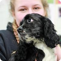 Adopt A Pet :: Malibu - Morganville, NJ