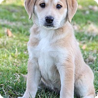 Adopt A Pet :: Ellie - New Oxford, PA