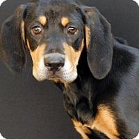 Adopt A Pet :: Marnie - Newland, NC