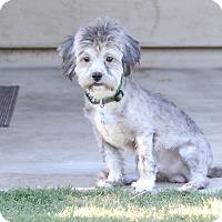 Adopt A Pet :: Bobo - Phoenix, AZ
