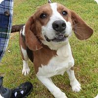 Adopt A Pet :: Copper-ADOPTED!!! - Ashland, VA