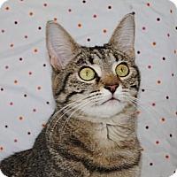 Adopt A Pet :: Tinka Doo - Palmdale, CA